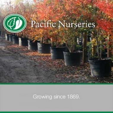 pacificnurseries1