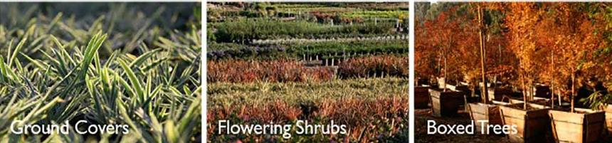 pacificnurseries2