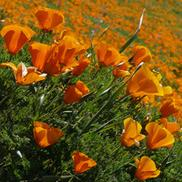 pacificnurseries6